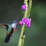 hummingbird family fun birding