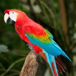 passion Family Birding macaw
