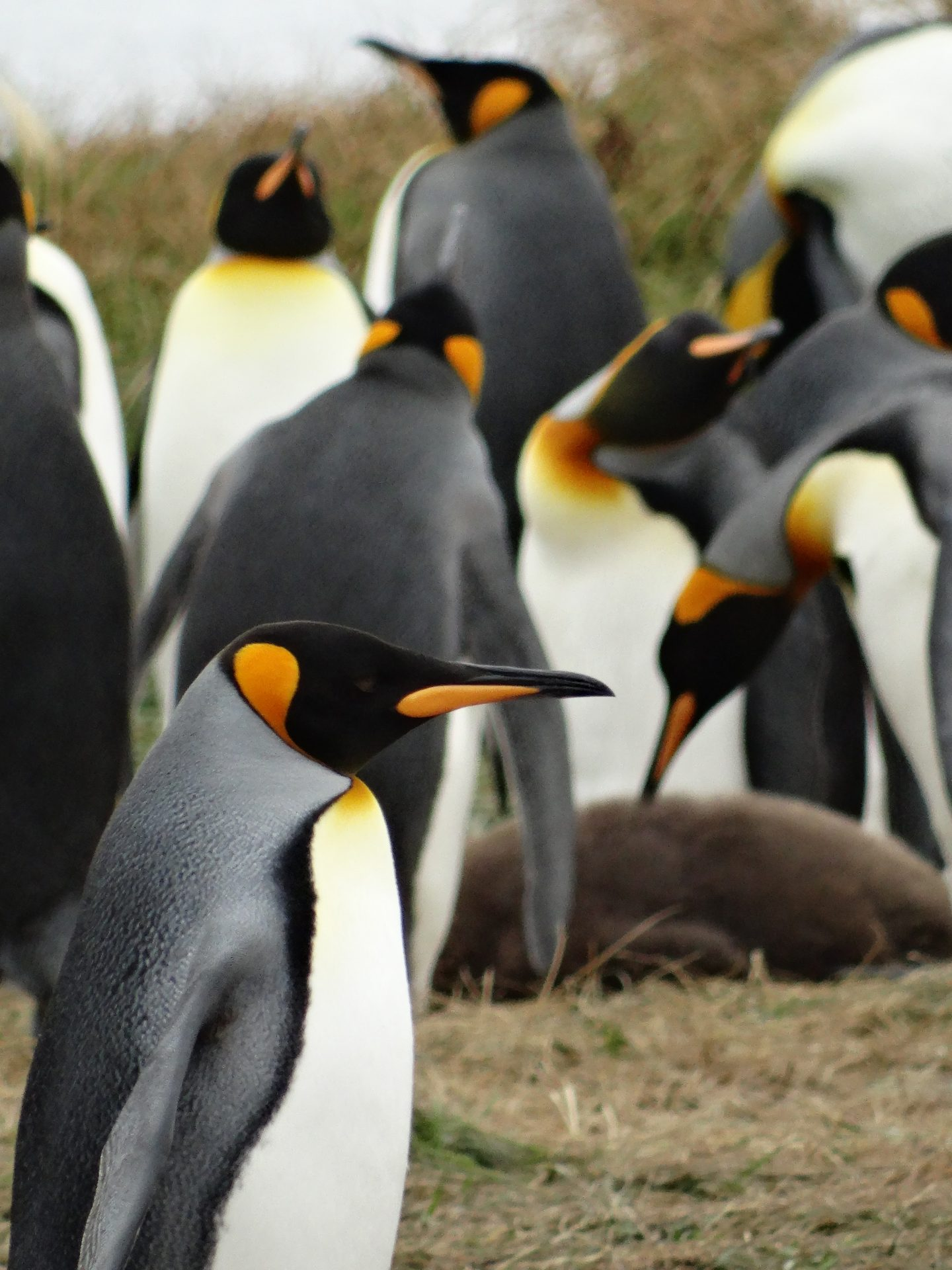 Penguins world argentina