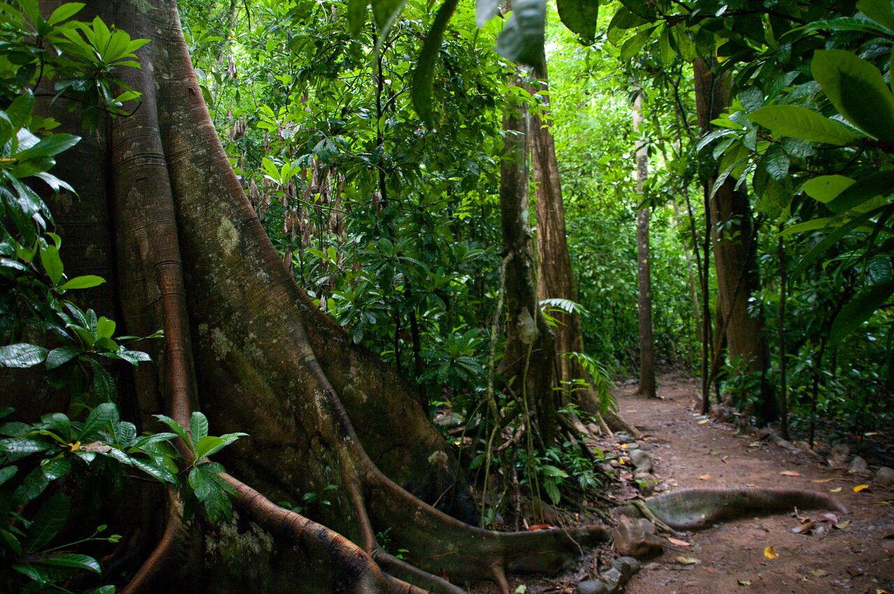 Rainforest family nature