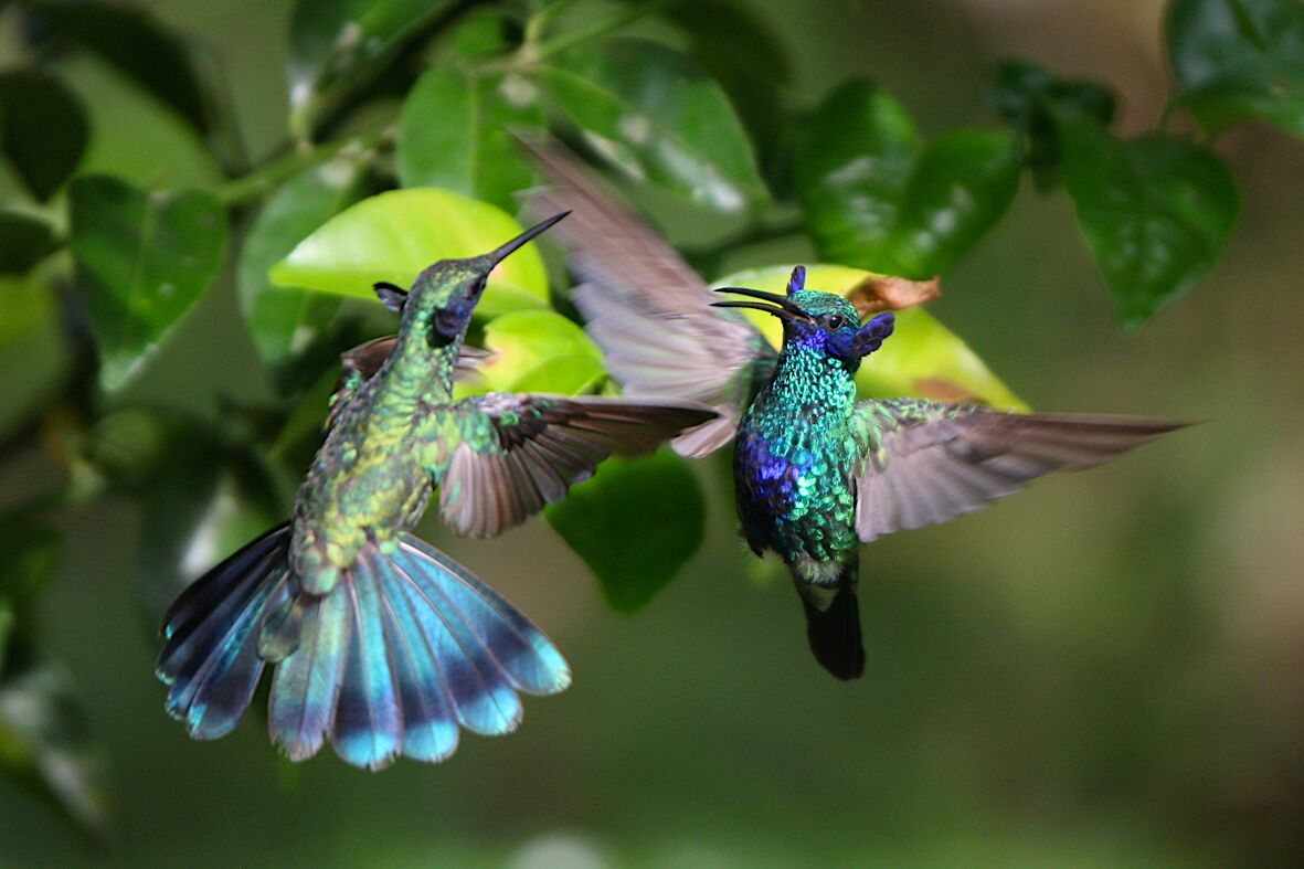 hummingbirds family adventure
