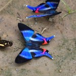 butterflies family adventure