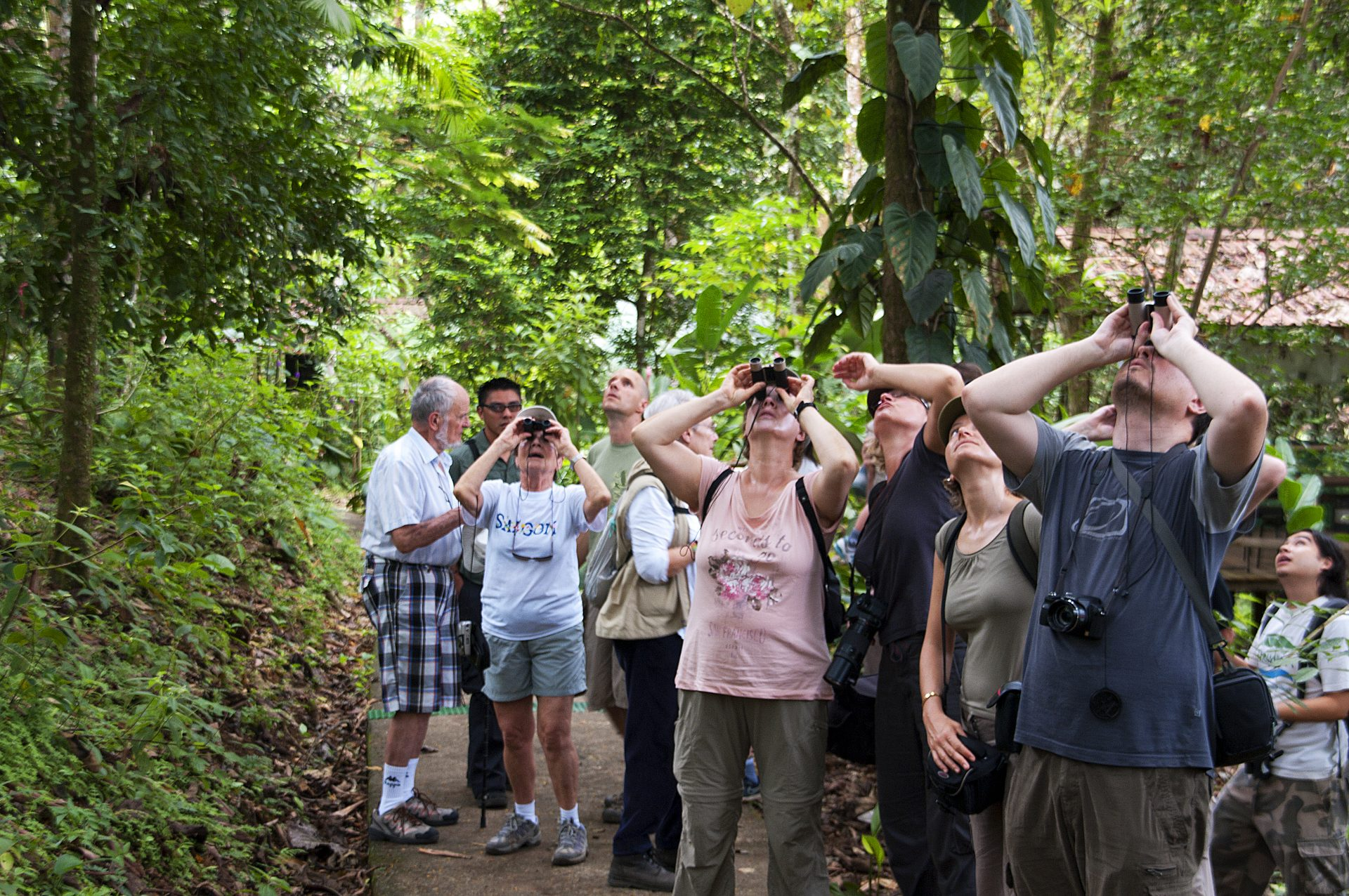 jungle hike birding